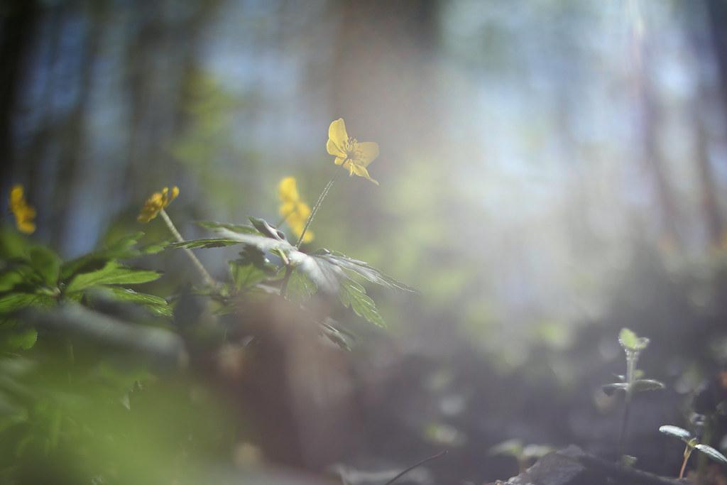 фото: Весна