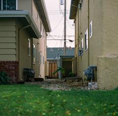 Santa Clara, California (bior) Tags: hasselblad500cm provia100f provia hasselblad mediumformat 120 6x6cm square santaclara house suburbs residential lawn