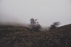 LeaveMeHere (gabyuchi1) Tags: gloomy gloom moody mood nature lonely planet fog dark feel color dull