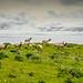 Dreamy Herd