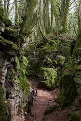 Puzzlewood, Forest of Dean (jacquemart) Tags: puzzlewood forestofdean drwho gameofthrones moss ancientwoodland gloucestershire