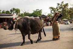 Herding - Takumar 50mm 1.4 (thomas.pirolt) Tags: takumar sony 50mm india 14