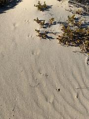 tracks in the sand 2 (julie burgher) Tags: roystonheadwalk roystonhead innesnationalpark yorkepeninsula southaustralia tracksinthesand
