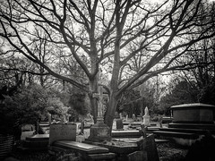 20190304-0515-Edit (www.cjo.info) Tags: 1830s 1836 19thcentury bw england europe europeanunion lambeth london m43 magnificent7 magnificentseven magnificentsevengardencemeteries microfourthirds nikcollection olympus olympuspenfgzuikoautow20mmf35 olympuspenf penfmount silverefexpro silverefexpro2 southmetropolitancemetery unitedkingdom westnorwood westnorwoodcemetery westerneurope blackwhite blackandwhite carving cemetery cross decay digital flora gravegraveyard manualfocus monochrome overgrown plant stone stonework tree