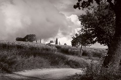 Almost back home, at last... (Didacus67 (mostly off, my friends...)) Tags: italy umbria oak tree path dirtroad olivetrees olivegrove uliveto ulivi oliveto olivi italia clouds cloudy sky hills house farm farmhouse farmstead casale countryside campagna colline bark corteccia cipressi cypress grasses biancoenero bw toned darktable gimp silverefex2 luminositymasks nikon d5100 peaceful serene silence earlymorning morning