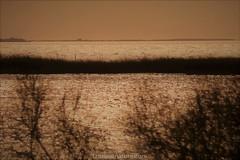 Etang du Vaccares (fauneetnature) Tags: camargue étang vaccares paysage coucherdesoleil sunset landscapephotography photonature photopaysage nature naturephotography