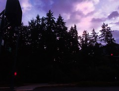 New Bope before the Return Home (WallisColours) Tags: trees pine sunset clouds seattle redmond washington glow west coast pacific northwest pnw soft cloudy pink