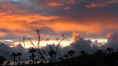 Nature Imitating Nature (Rand Luv'n Life) Tags: odc our daily challenge life is good nature glorious sunset silhouette palm trees branches golden clouds radiant outlines grateful