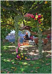 La cornice (Maulamb) Tags: cremona cornice fiori