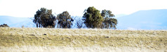 Wallaroo Road 07 (BrianRope) Tags: wallarooroad countryside winter actnsw australia
