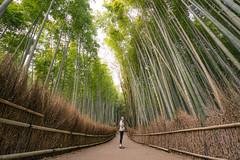 Growing Tall (JeffMoreau) Tags: maternity week future mom pregnant sony a7ii zeiss bamboo grove kyoto japan arashiyama wide travel