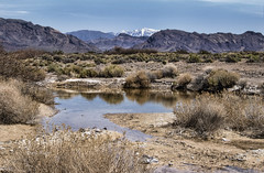 Ash Meadows (Dailyville) Tags: nevada ashmeadows water reflection snowcapped sky summer outdoor dailyville ohiofoothills nationalwildliferefuge