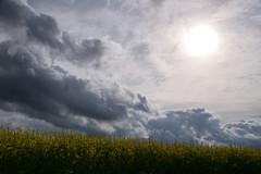 Nuages (Croc'odile67) Tags: nikon d3300 sigma contemporary 18200dcoshsmc paysage landscape ciel cloud sky nature nuages colza