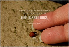 Abraham Maslow One of the goals of education should be to teach that life is precious. (symphony of love) Tags: abrahammaslow learning learningquote quoteonlearning picturequoteonlearning education symphonyoflove sol omrekindlingthelightwithin om quotation quote quoteoftheday quotetoliveby quotes qotd inspirationalquote inspirational inspiringquotes inspiration motivationalquotes motivatingquotes motivation dailymotivation dailyinspiration dailyquote potd picturequote picture pictureoftheday pictures