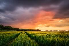 Into the sunset (Ellen van den Doel) Tags: sky voorjaar nature lente landschapm clouds zonsondergang sun lucht spring mei 2018 natuur sunset zon goeree spoor track overflakkee landscape wolken
