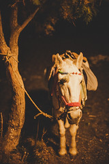 Horse with no  name (mripp) Tags: greece night animal justgoshoot instagood instaphoto picoftheday photooftheday photogram capture photographydaily photographyislife iphoneography camera composition photoshop instadaily igers instafocus igworldclub visuals aesthetics throughthelens snapshot exposure moment photographyaddict