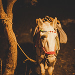 Horse with no  name thumbnail