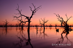 Reflecting evening at Kinchega (Dan Wiklund) Tags: kinchega nsw newsouthwales sunset lake trees silhouette reflection landscape nature natural 2018