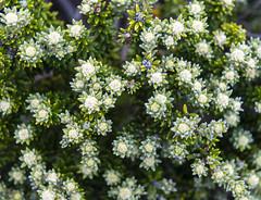 Cratère Commerson, Reunion / Кратер Комерсон, Реюньон (dmilokt) Tags: природа nature пейзаж landscape гора mountain dmilokt цветок flower