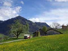 Landwirtschaft (Priska B.) Tags: landwirtschaft buochserhorn berg wiese baum haus bauernhof frühling schweiz switzerland swiss svizzera nidwalden zentralschweiz innerschweiz