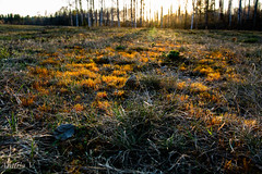 Last Light2 (vilianttila90) Tags: nikon sigma d7100 1770 28 nature light evening moss