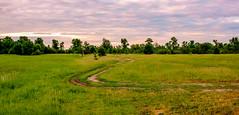 Zig Zag (kud4ipad) Tags: 2018 desna ukraine river landscape tree road