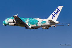 F-WWAF // JA382A All Nippon Airways Airbus A380-841 MSN 263 (Florent Péraudeau) Tags: fwwaf ja382a all nippon airways airbus a380841 msn 263 a380 388 841 rolls royce ana flyingturtles flying turtles japan japanese kaitheflyingturtle kai turtle
