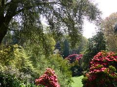 P1190114 (jrcollman) Tags: gardens places plants rplant eplant rhododendron trebahgardennttrust embothrium