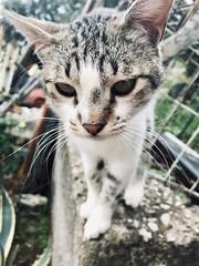 Cat (giadasaccoccio) Tags: italy italia latina itri amore love 2019 natura primavera aprile tigro gatto cat