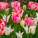 Lake District April 2019, Holehird Gardens, Ambleside