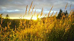 Como devemos viver nossas vidas? (Philipe Li) Tags: céu natureza nuvens paisagem amarelo ocristianismohoje confiançaemdeus mensagemdeconfiançaemdeus féemdeus cristã