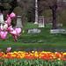 "Cincinnati - Spring Grove Cemetery & Arboretum ""Tulips Along Willow Lake"""