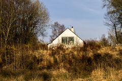 ...evening sun... (Jane Friel) Tags: janefriel janefriel2019 rural eveninglight grass wildgrass nature naturallight ruralbuilding house houseineveninglight