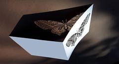 - play of shadow - (Jac Hardyy) Tags: play shadow light card butterfly silhouette paper cut black white shade spiel lichtspiel licht schattenspiel schmetterling kuinst art schmetterlinge butterflies scherenschnitt schwarz weis karte postkarte gruskarte schatten