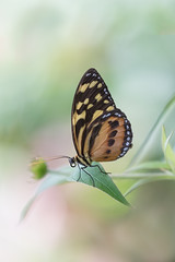 Butterfly Wonderland (MichellePhotos2) Tags: butterfly wonderland macro 150mm nikon d850 nikond850 scottsdale arizona insect