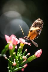 Butterfly Wonderland (MichellePhotos2) Tags: pink flower flora butterfly wonderland macro 150mm nikon d850 nikond850 scottsdale arizona insect