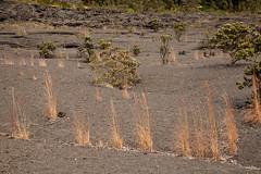 Kilauea Iki, Hawaii Volcanoes National Park, Hawaii (Roger Gerbig) Tags: kilaueaiki hawaiivolcanoesnationalpark kilauea volcano hawaii bigisland island rogergerbig canoneos5dmarkii canonef24105mmf4lisusm 3054