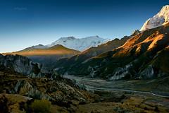 Sunrise. From right to left, Annapurna III (7.555m), IV (7.525m) & II (7.937m) (YogiMik) Tags: annapurnaiii7555m iv7525mii7937msunrise nepal annapurna himalayas yogi mik landscape mountains blue sky rocky amazing beautiful splendid trekking travel summits elitegalleryaoi bestcapturesaoi