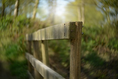 Point of Focus... #FenceFriday #HappyFenceFriday #Fence #HFF #Lensbaby (KissThePixel) Tags: lensbaby lensbabytwist60 60mm twisty twistybokeh bokeh twist60mm fence fencefriday fencephotography fencebokeh happyfencefriday happyfriday friday april spring woodland longacremanor light sunlight shadows nikon f25 25 nikondf hff