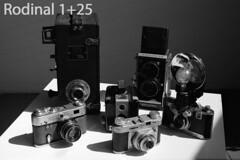 DevTest_Rodinal1-25 (Mark Dalzell) Tags: black white developing test bw nikon f3 f3hp kodak tmax tmax400 film xtol sprint sprintsystems d76 rodinal hc110 diafine caffenol stand standdevelop standdevelopment fpp filmphotographyproject