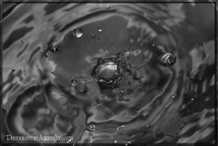 PEQUEÑA GOTA DE AGUA. SMALL DROP OF WATER. NEW YORK CITY. (ALBERTO CERVANTES PHOTOGRAPHY) Tags: dropofwater monochrome blackwhite blanconegro black white blanco negro photography retrato portrait drop water raindrop rain gotadeagua indoor outdoor blur macro closeup bokeh luz light color colores colors brillo bright brightcolors photoart art creative photoborder small gotadelluvia stetch round circle drawing burbuja bubble newyork city usa nyc nightcolor lightcolor