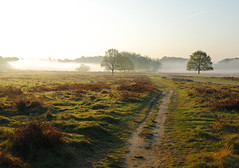 _T6A6031REWS Morning Greetings, © Jon Perry, 20-4-19 zbq (Jon Perry - Enlightenshade) Tags: fog mist richmondpark dawn morning jonperry enlightenshade arranginglightcom