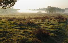 _T6A6030REWS Early Mist, © Jon Perry, 20-4-19 zbq (Jon Perry - Enlightenshade) Tags: mist fog richmondpark dawn morning jonperry enlightenshade arranginglightcom