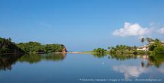 IMG_7198.jpg (Dhammika Heenpella / CWSSIP Images of Sri Lanka) Tags: dhammikaheenpella traveldestination ශ්රීලංකාවේෆොටෝ ශ්රීලංකාවේචායාරූප ධම්මිකහීන්පැල්ල estuary placesofinterest polwattariver imagesofsrilanka srilanka weligama polwathumodara ශ්රීලංකාව