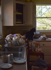 an altar to the ritual of cat feeding (rootcrop54) Tags: cats cat kitchen restaurantchina bowl bowls feeding eating multiple neko macska kedi 猫 kočka kissa γάτα köttur kucing gatto 고양이 kaķis katė katt katze katzen kot кошка mačka gatos maček kitteh chat ネコ