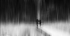 into the light (marianna armata) Tags: people couple walking light path boardwalk wilderness wild bw monochrome monochromatic p2850392 boharnois marianna armata