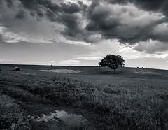 Solitary (Stefano085) Tags: tree blackandwhite biancoenero solitary loneliness nature italy ladispoli clouds