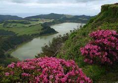 Lagoa das Furnas - Açores (Rosa Gamboias) Tags: lagoadasfurnas açores furnaslagoon sãomiguel azores portugal landscape view vista paisagem scenery cenário lagoa lagoon rosagambóias wildlife nature natureza naturaleza green verde spring primavera coth5