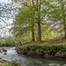 River Dyfi