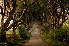 Dark Hedges (Sphotino71) Tags: darkhedges ireland irlanda conteadiantrim trees